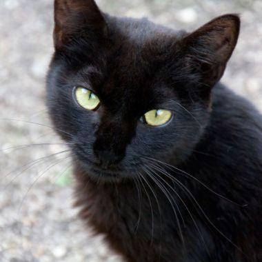 Gatos negros Tamaulipas Halloween