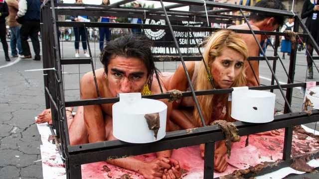 Cárcel para quien abandone animales