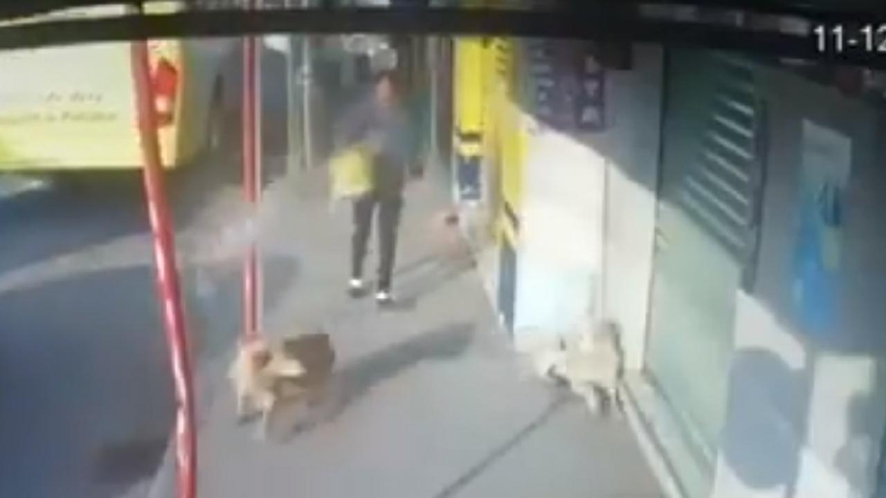 mujer captada lanzando cubetada agua perritos