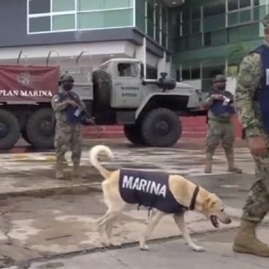 Perrito rescatado inundación Tabasco será rescatista