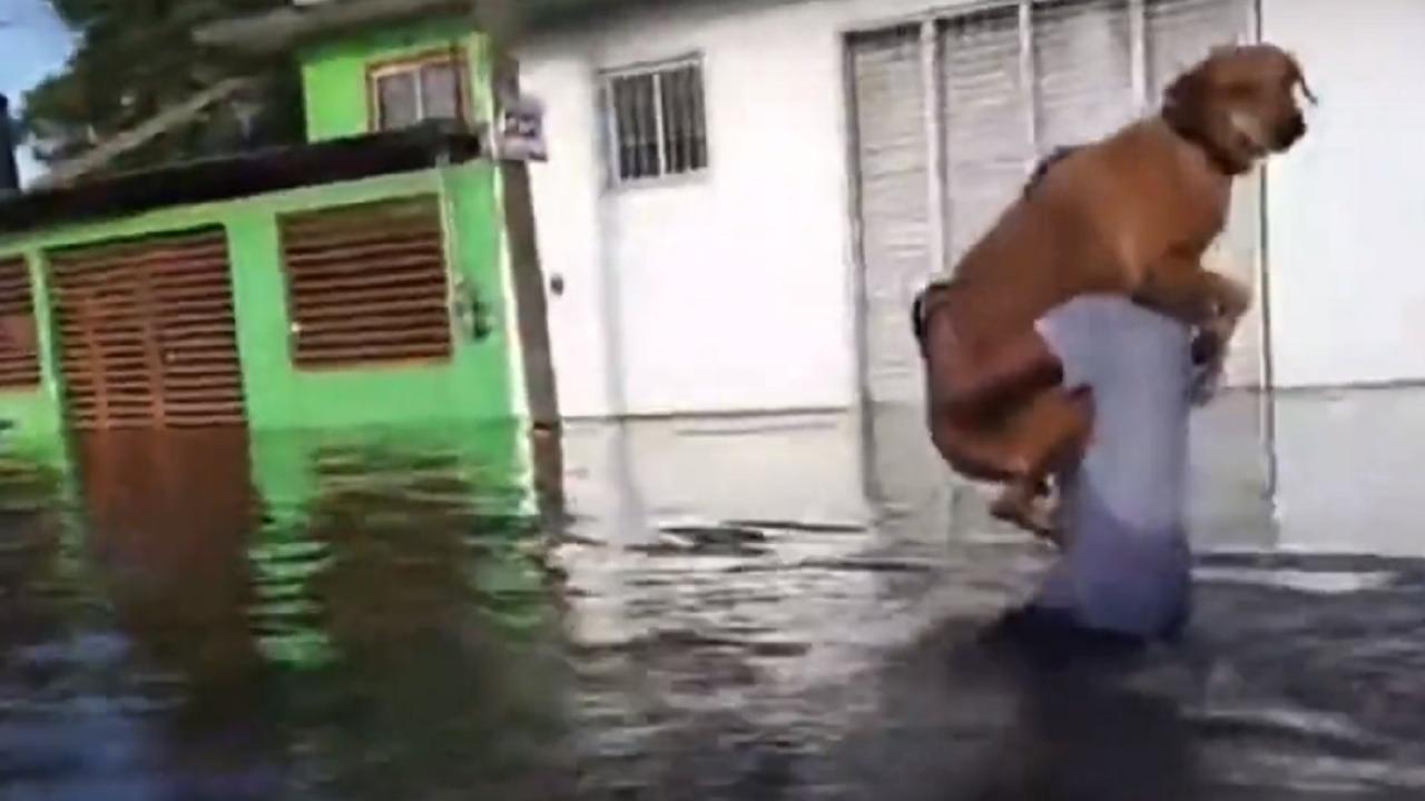 video joven carga su perrito frijol salvarlo inundación Tabasco