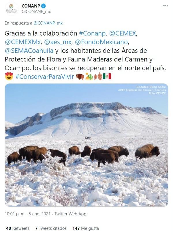 Tuit CONANP bisonte americano