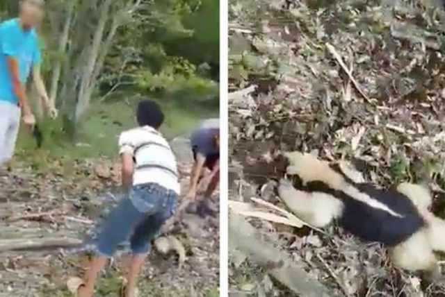 Niños matan oso hormiguero en Tabasco