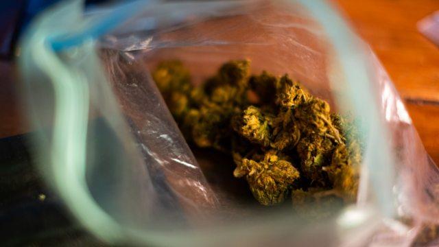 Investigan posibles efectos de marihuana contra inflamación por COVID-19