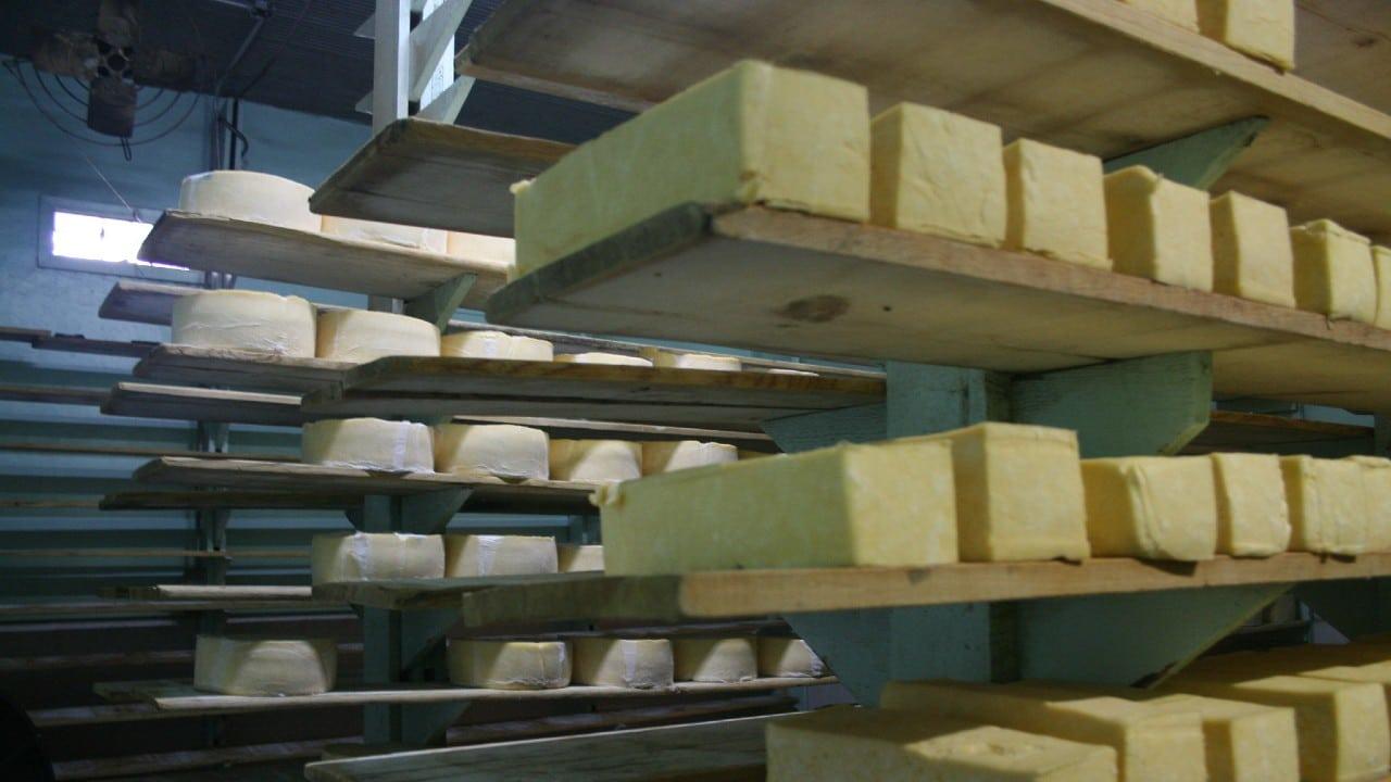 destruyen 10.6 toneladas queso menonita contaminado Chihuahua