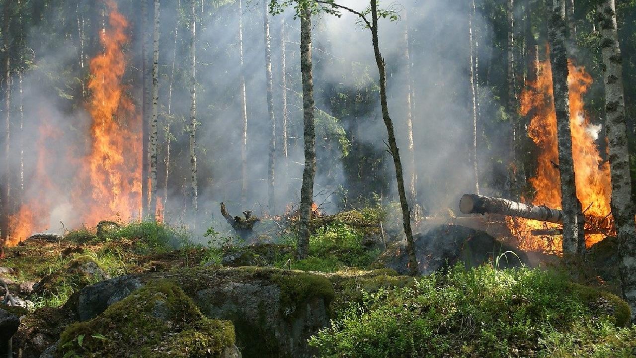 AMLO asegura sus rivales intentan demeritarlo con incendios forestales