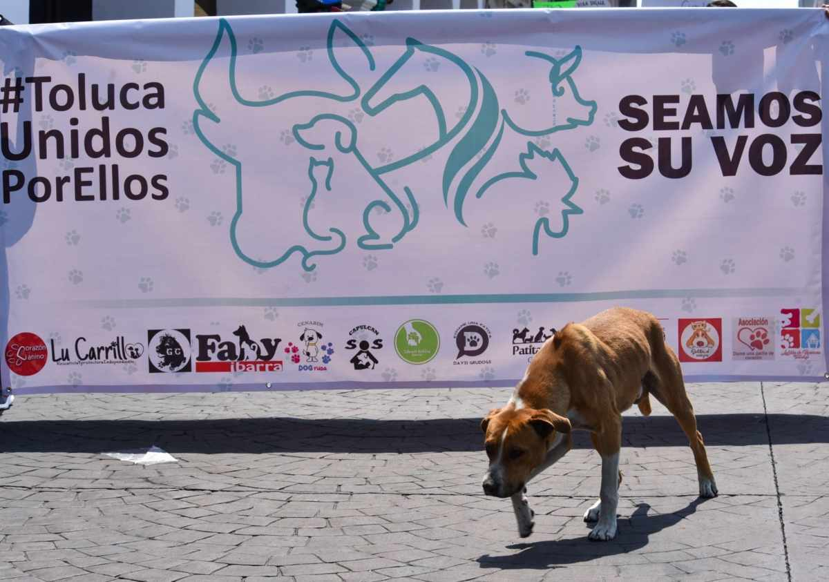 Marcha contra el maltrato animal
