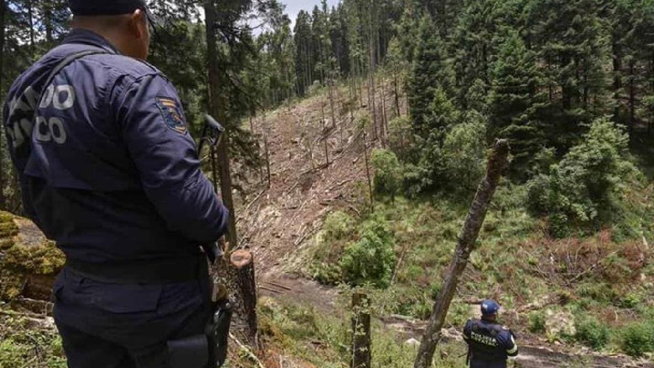 Los Correa controlan la tala clandestina de bosques en Michoacán