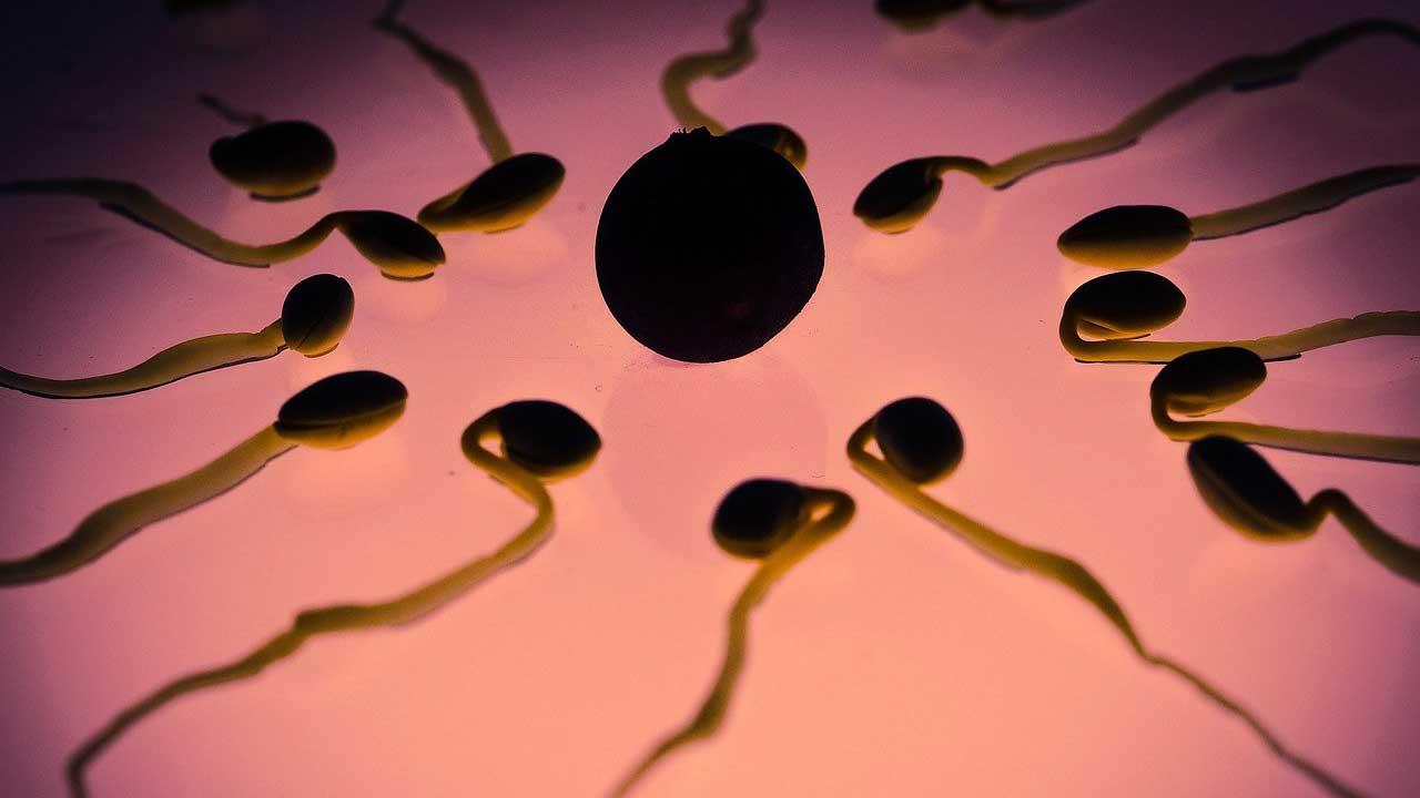 Un donador de esperma ha engendrado 35 hijos y administra dos grupos de Facebook, asegura que demanda ha subido por la pandemia