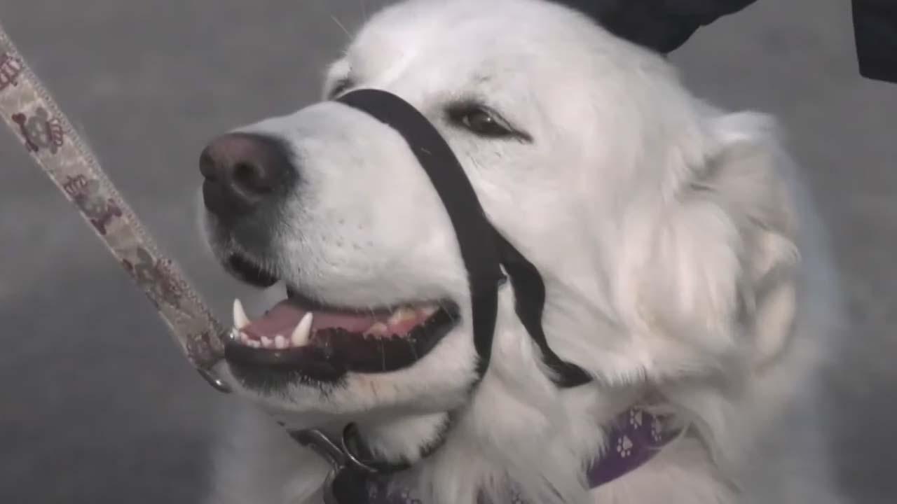 Canadá perrita salva vida dueña