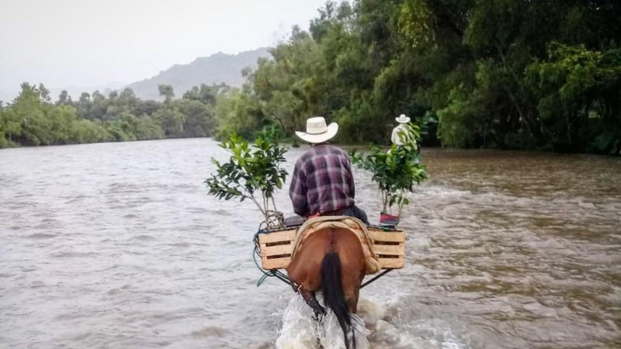 Sembrando Vida no apoya al medio ambiente