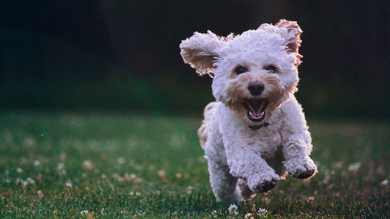 Los perros pueden sonreír