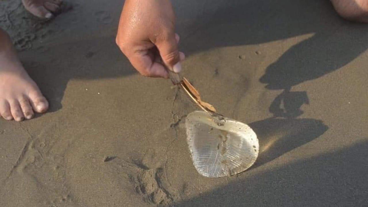 Encuentran implante en la playa y lo confunden con medusa