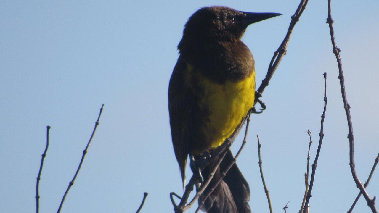 Profepa investiga muerte de aves en Durango