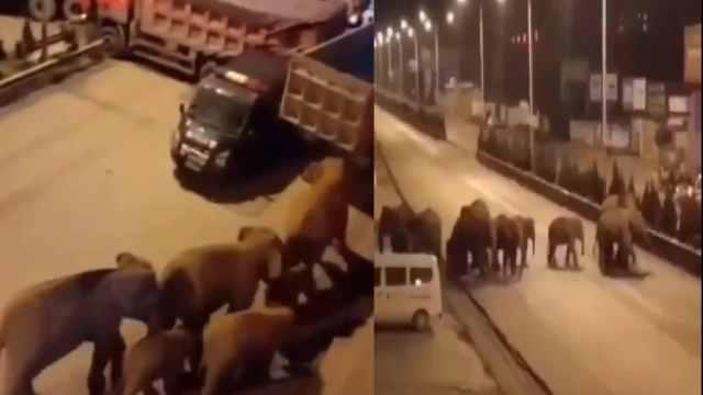 Video manada elefantes viajan calles en China