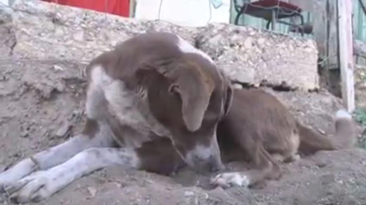 Perro 'Cucho' espera la llegada de su dueño fallecido en la mina de Rancherías