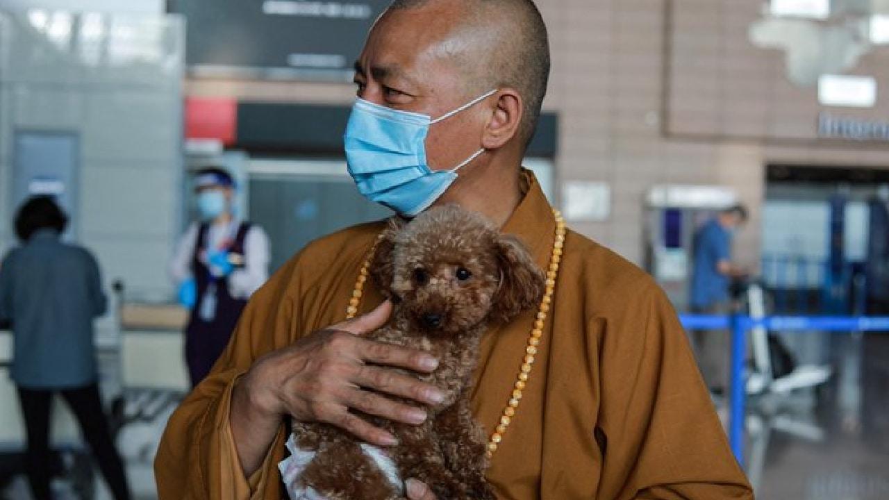 Monje budista rescató a ocho mil perros