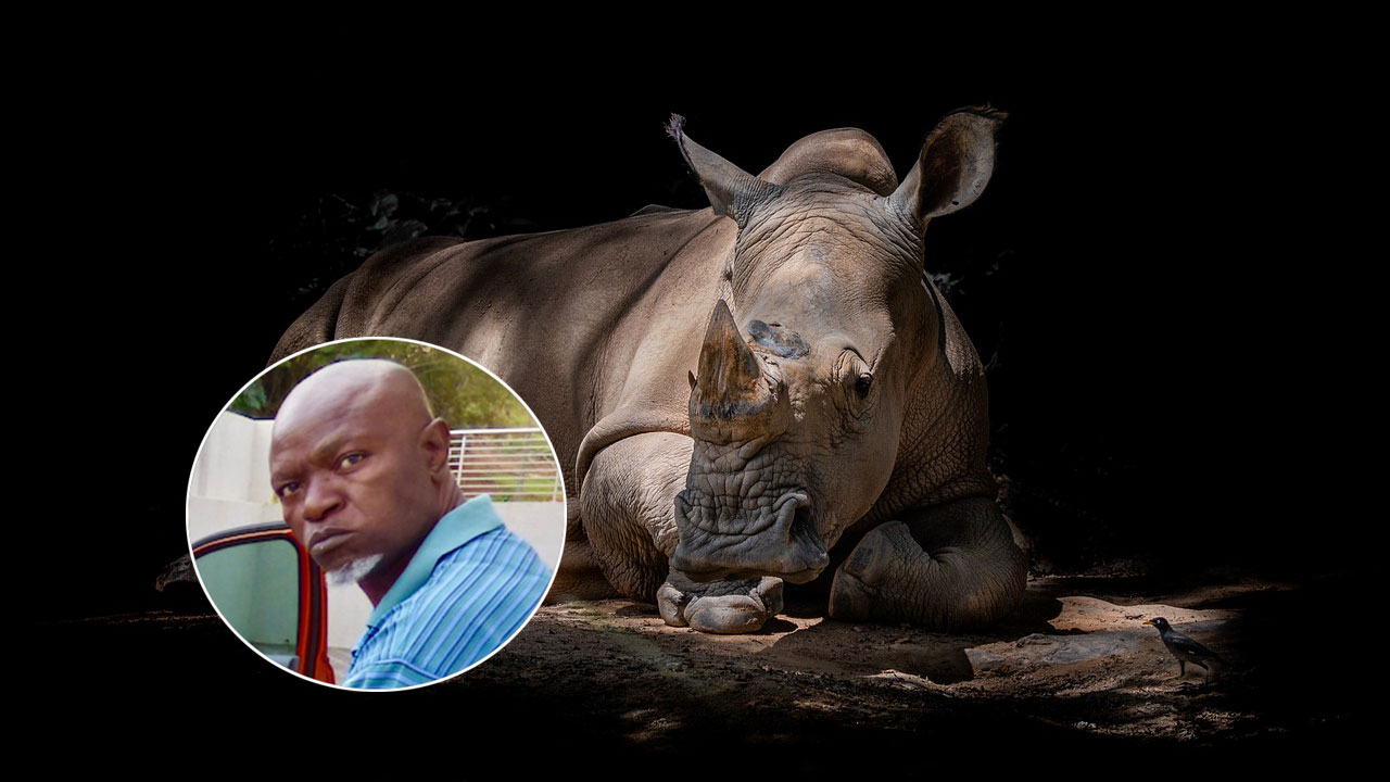 Asesinan cazador furtivo rinocerontes Sudafrica
