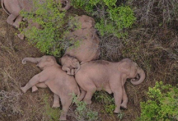 Imagen Elefantes Descanso Bosque China