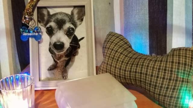 Joselito, el perrito maltratado que murió siendo muy feliz