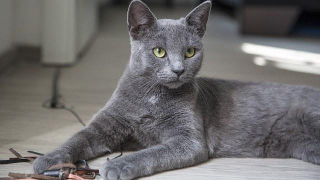Denunciaron fiesta clandestina encontraron gato escuchando música