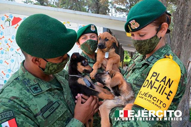 Crean refugio para perritos callejeros en aeropuerto de Santa Lucía