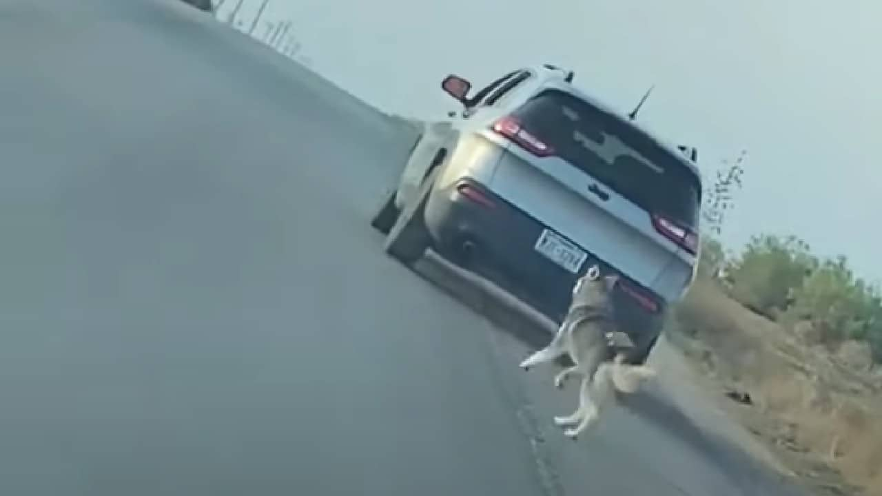 Video Detienen Hombre Abandona Perro Carretera Estados Unidos