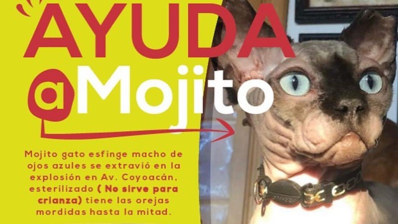 Piden ayuda para encontrar a gato 'Mojito'