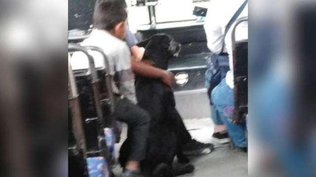Chofer conmueve; deja subir a niños de 'bajos recursos' con su perro al camión