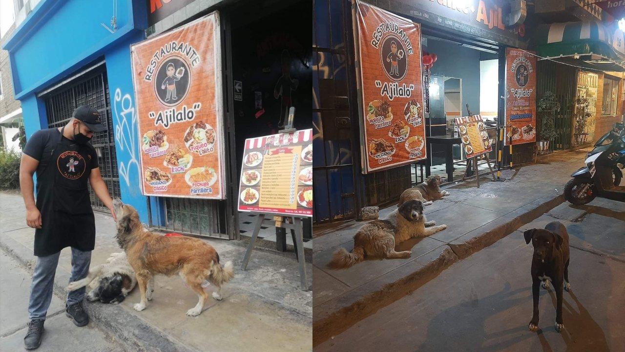 taquero organiza banquete para perritos de la calle
