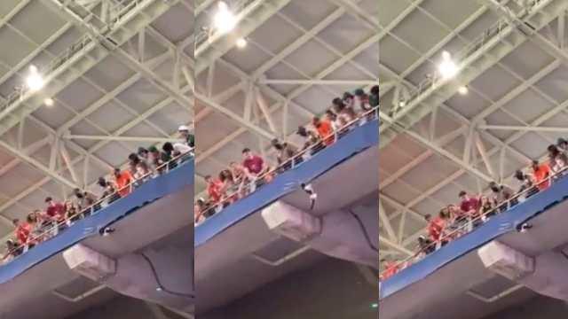 Rescataron un gato que colgaba de la tribuna de un estadio