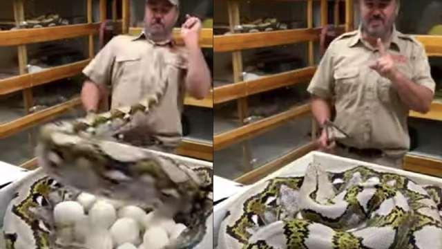 Cuidador Atacado Agresiva Serpiente Zoológico Video