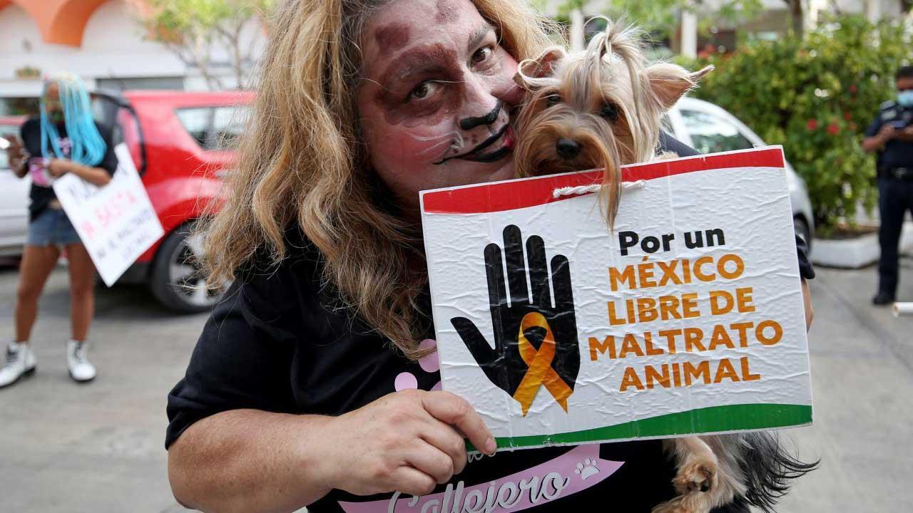 Senado prohíbe pruebas de cosméticos en animales