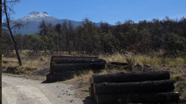 Árboles Peligro de Extinción Tala Pastoreo