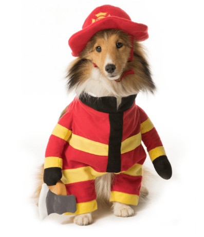 here is a list of the 10 cutest halloween dog costumes in my opinion
