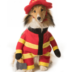 18 Cutest Halloween Dog Costumes