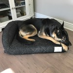 Brentwood Home Runyon Deluxe Pet Bed Review & Giveaway (ends 2/5)  #JPCHGG16 #JustPlumCrazy @BrentwoodHomeLA