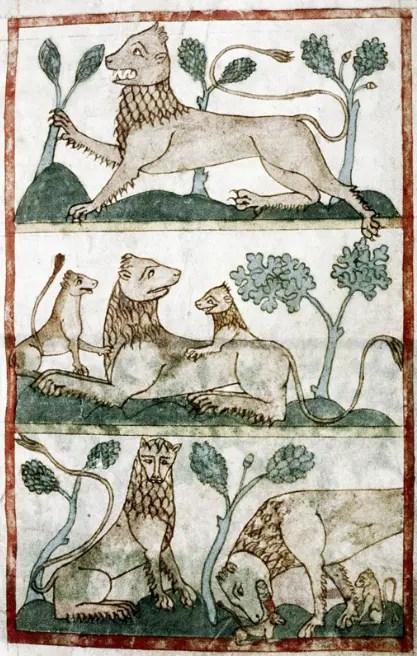 Représentations médiévale de lions (BNF)