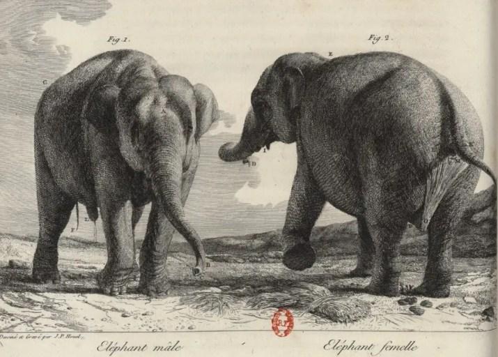 Histoire naturelle des deux éléphants, mâle et femelle, du Muséum de Paris, venus de Hollande en France en l'an VI. Houel, Paris, 1803.