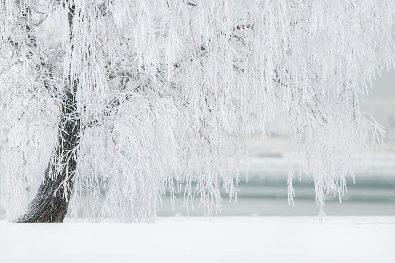 un arbre avec des branches toutes blanches, recouvertes de givre