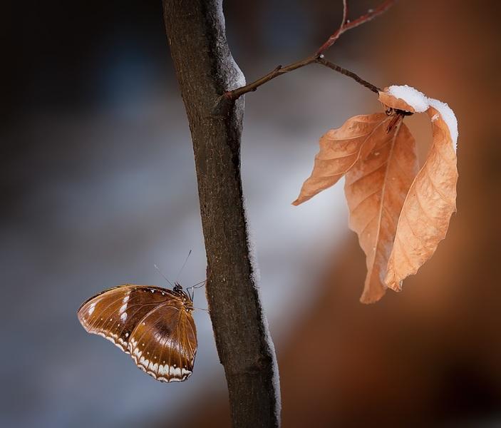 papillon sur une branche d'arbre enneigée