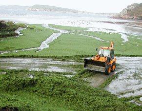 Algues vertes à Crozon (29). 1.760 m³ d'algues vertes ramassés à Postolonnec . Pas moins de 200 m³/jour d'algues vertes ont été ramassés jusqu'à début septembre