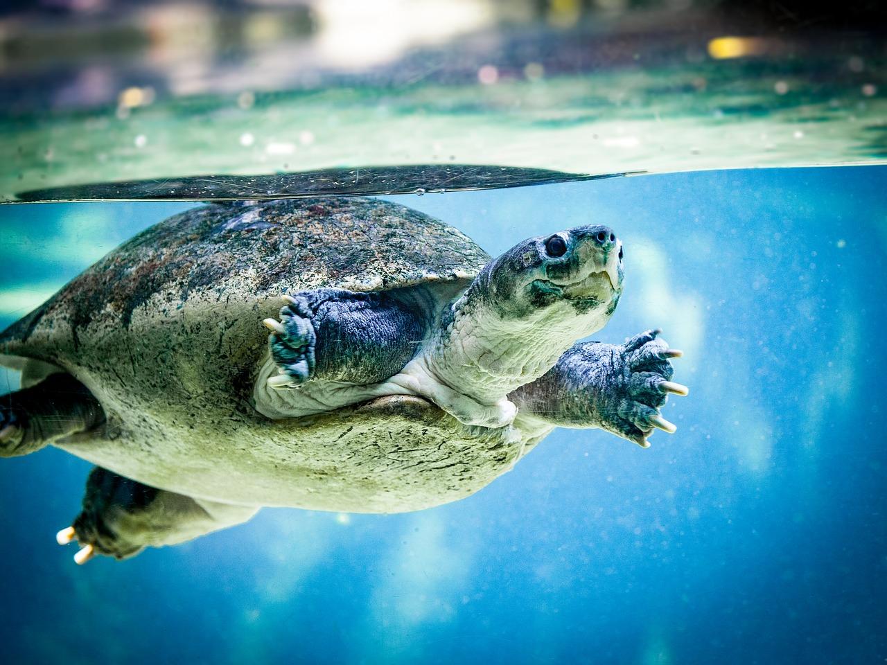 stratégie des tortues