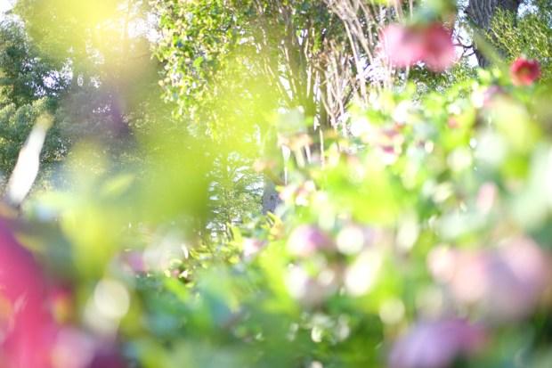 Dream Garden ヤブコウジ