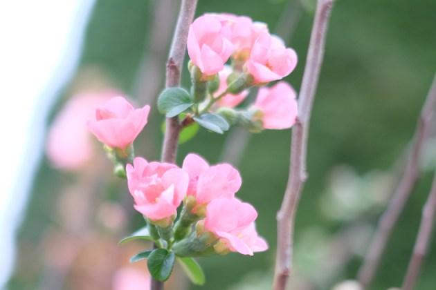 好きな花見っけ_35mm