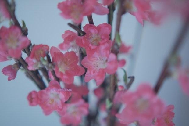 momo_桃の花_2