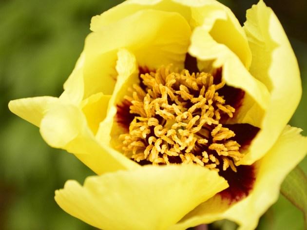 なんちゃってマクロで黄色いお花 キットレンズで撮影