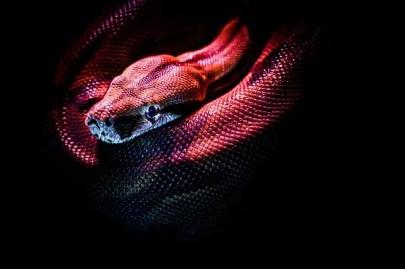 meilleurs livres sur les reptiles