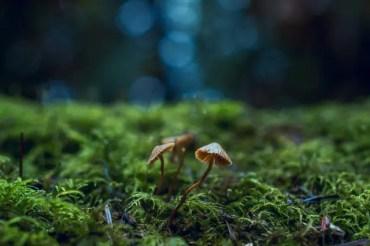 Meilleurs ouvrages sur les champignons