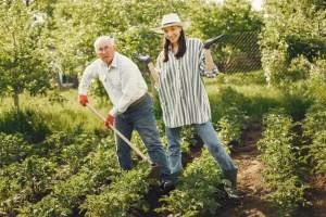 meilleurs livres de jardinage